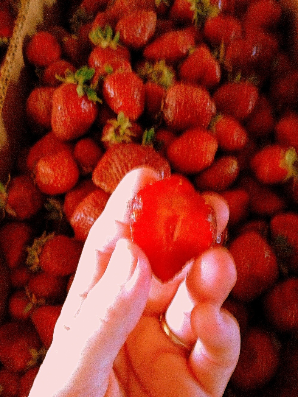 A ripe strawberry, locally grown, is red through and through.